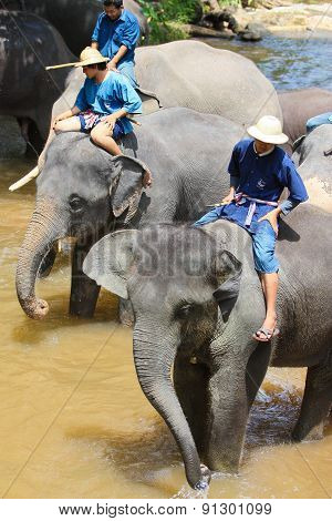 elephant bathing in the river
