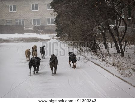 Pack Of Stray Dogs Whose Owners Have Fled Their Homes To Esc