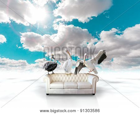 Sofa and animal concept.