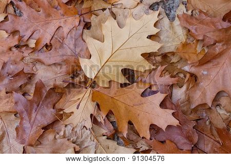 Fallen Leaves. Autumn Background