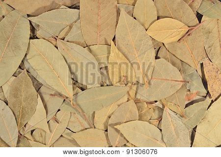 Dry Bay Laurel Leaves  Background