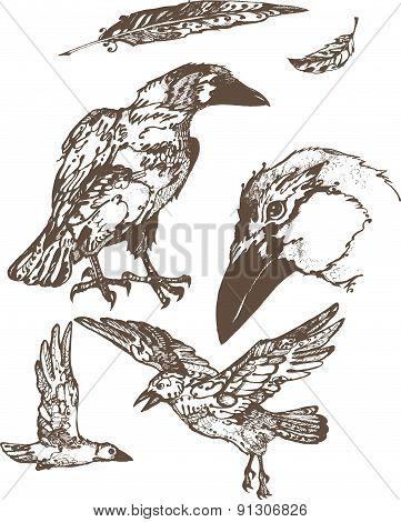 Grey ravens