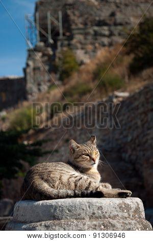 Cat Resting among ruins