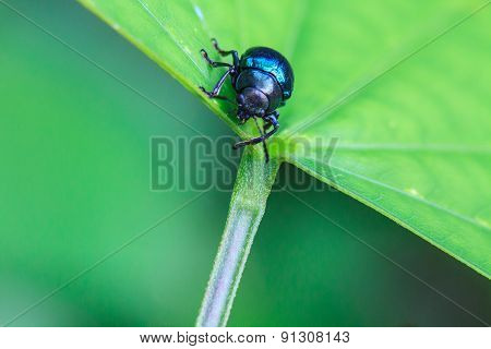 insect in nature background