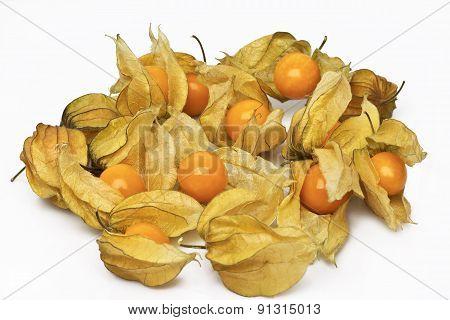 Physalis, edible husk tomato