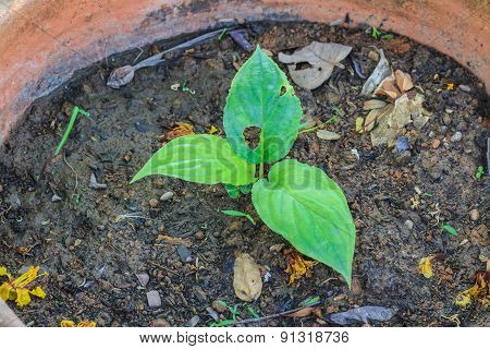 Young Tree Growing In Pot