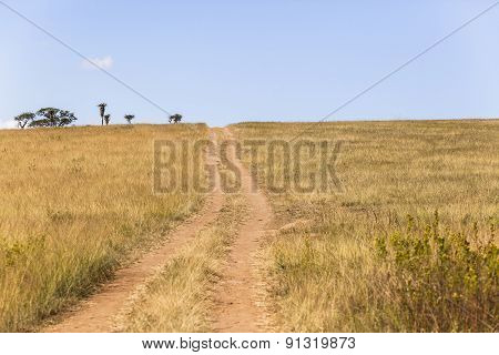 Dirt Road Tracks Landscape