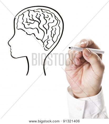 Drawing a human head with brain