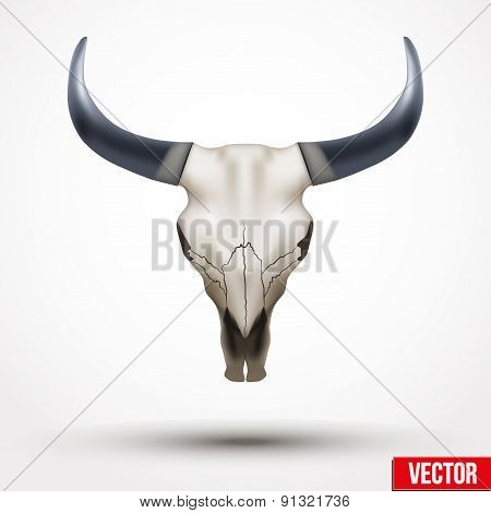 Animal skull with horns.