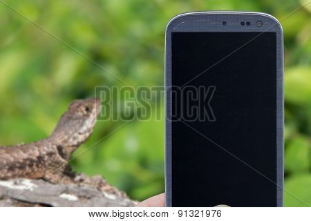 Smatrphone and repitile life. Idea of animal apps, taking shots, repitiles blogs and others. The blur image is a reptile on tree. Neotropical ground lizard in Maragogi, Alagoas, Brazil.