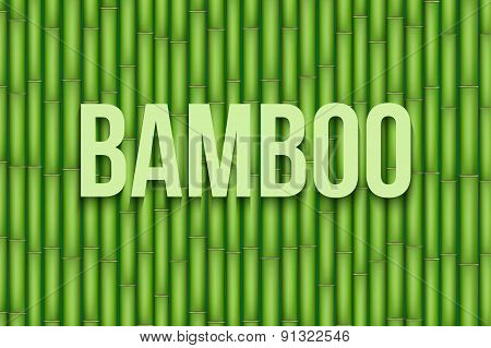Green Bamboo background. Vector