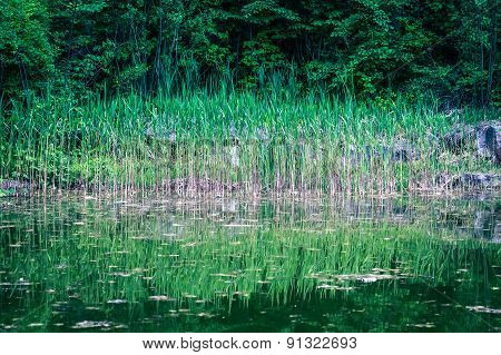 Lake In The Green Forest