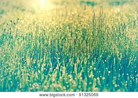 Spring grass covered with morning dew