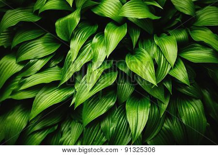 Green leaves dynamic background