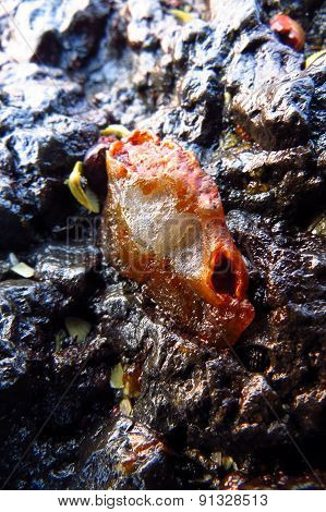 Fossiled Crab