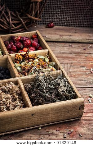 collected and dried herbs doctor