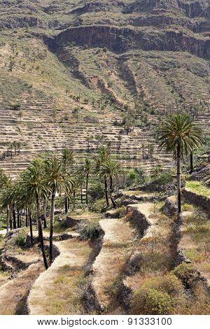 Agriculture on Gomera island, Spain