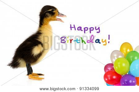 Little cute duckling with colorful balloons isolated on white