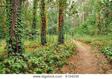 Beautiful Forest Trail