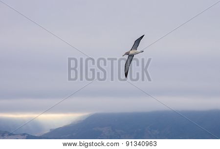 Albatros walvis whale
