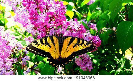 Beatiful Butterfly