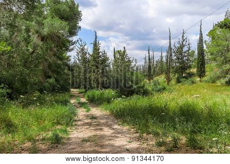 Empty Hiking Trail In The Pine Tree And Cypress Woods