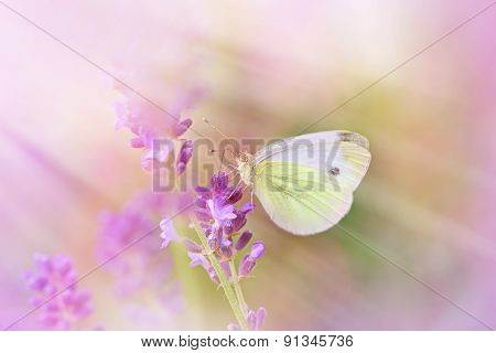Butterfly on beautiful lavender