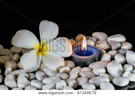 Plumeria Flowers Scented Candles