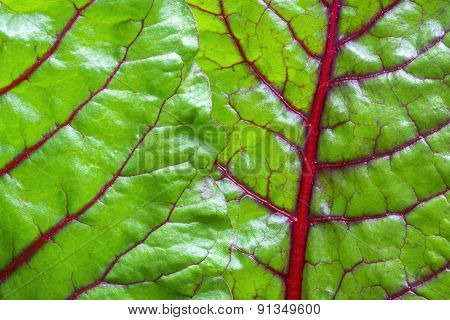 Swiss Chard Green Leaf Vegetable Closeup
