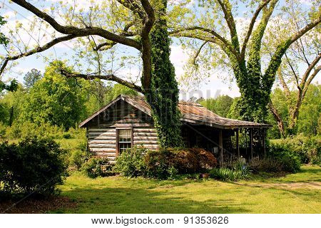 desolate cabin under spring sun