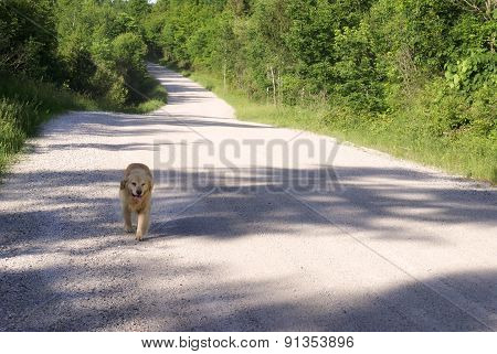 Dog Freely Walking