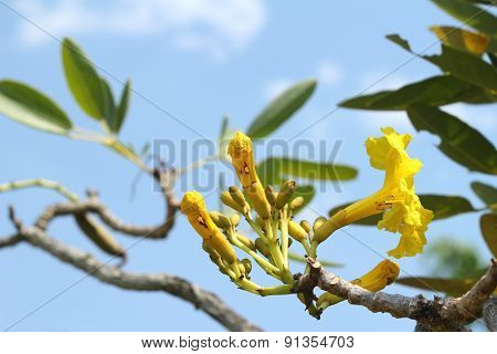 Yellow Flower In The Nature