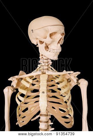 Human Skeleton Isolated On Black Background.