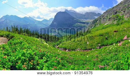 Wild Flowers In Panoramic High Alpine Landscape On The Grinnell Glacier Trail In Glacier National Pa