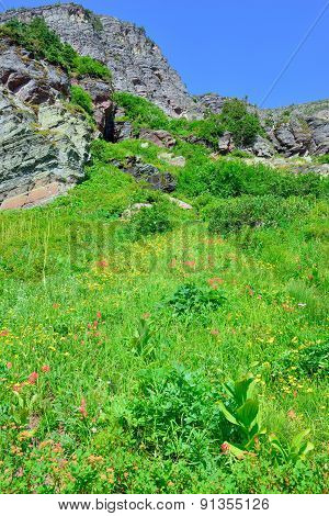 Wild Flowers And High Alpine Landscape Of The Grinnell Glacier Trail In Glacier National Park, Monta