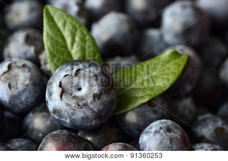 Blueberries Berry.