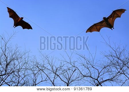 Bat Silhouettes Flying In The Sky - Halloween Festival