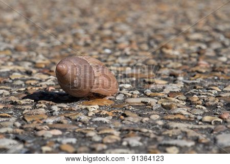 Snail In The Sun
