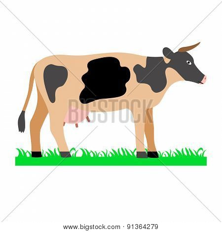 Cow on green field illustration