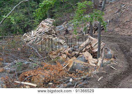 Piles Of Beech Logs