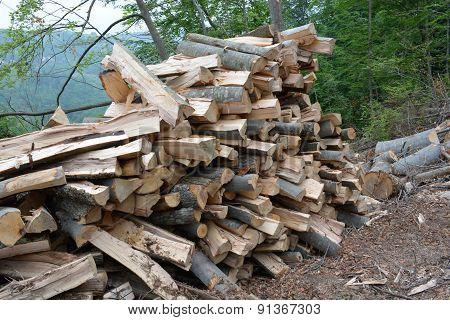 Pile Of Beech Logs