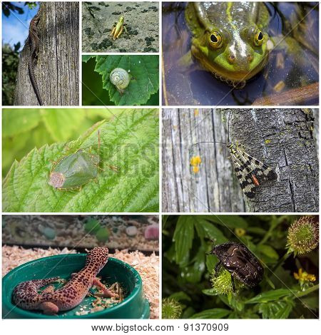 Collage of animals and insects