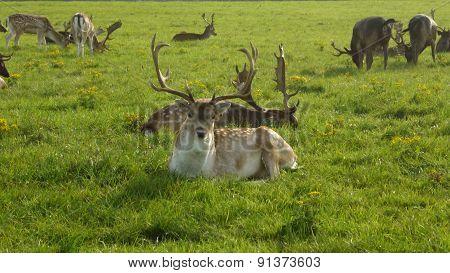 deer in the green