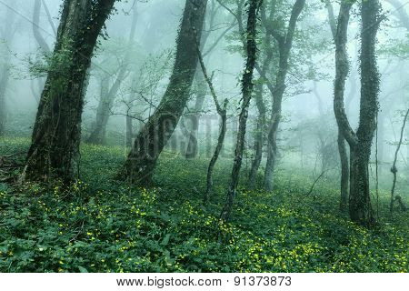 Trail Through A Mysterious Dark Forest In Spring