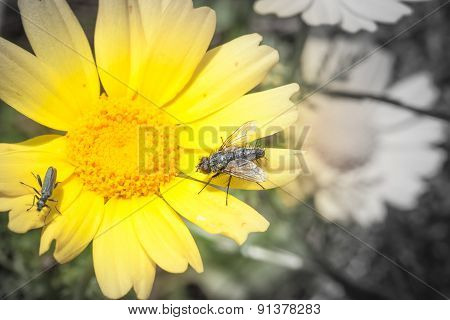 Feast Insects Pollen