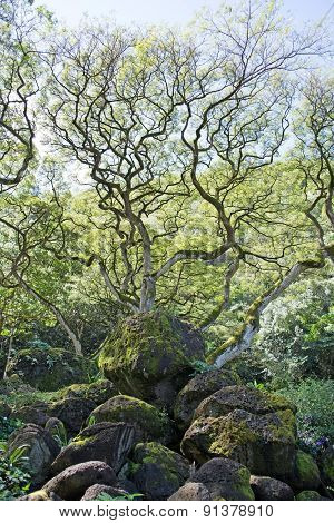 Forest Scene- Funny Curved Tree And Stones With Moss