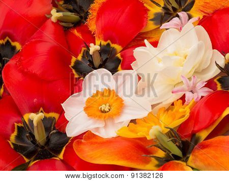 Spring Bouquet Of Daffodils And Tulips