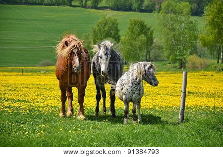 Two horses and a pony