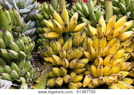 Fresh banana bunches in a tropical market in Myanmar