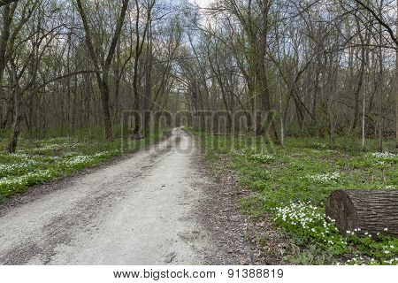 Spring Trail In The Woods